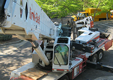 Emergency Tree Removal in Alpharetta
