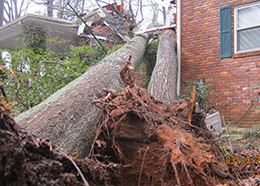 emergency tree service alpharetta ga.jpg
