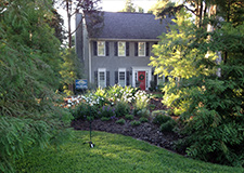 Tree Cutting & Pruning in Alpharetta