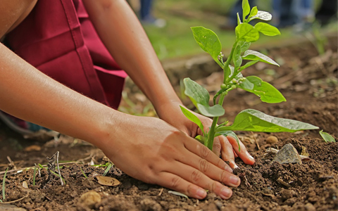 Planting trees to stop deforestation and climate change