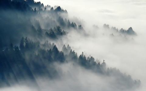Deforestation and climate change reduce oxygen and raise co2 levels in the air