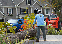tree service roswell ga removal services