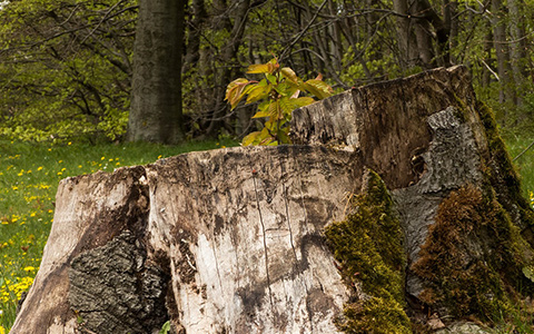 Kill and stop tree stumps from growing sprouts and new trees